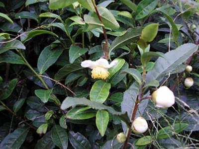 Flower61