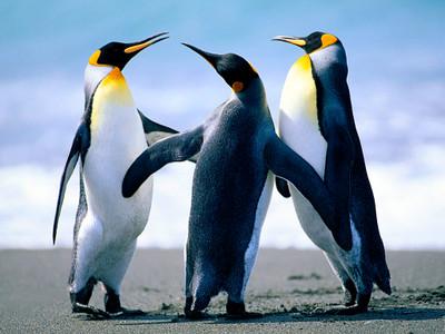 Penguins_2