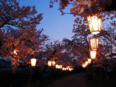 Sakura_0031